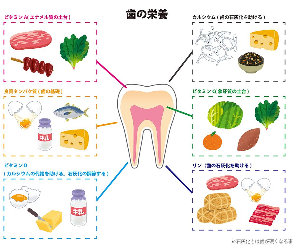 「子どもの歯・口の健康」⑩ 【歯質強化編】~歯の栄養を知ろう~