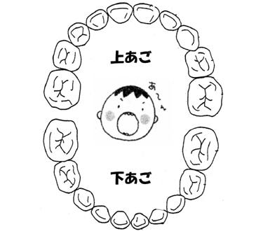 「子どもの歯・口の健康」②~乳歯の役割~